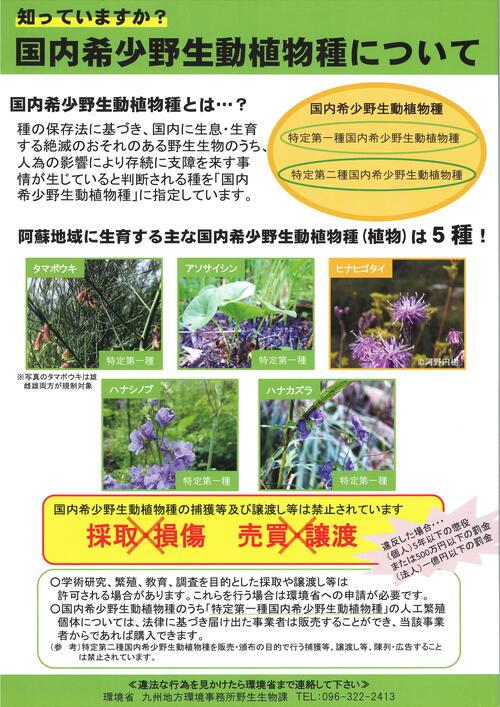 4.希少植物_001.jpg