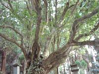 含蔵禅寺の金木犀
