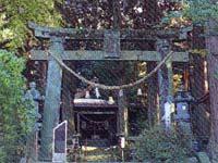 高森阿蘇神社の南郷桧