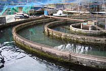 川部養魚場