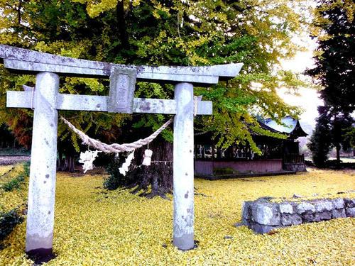 津留 年之神社の銀杏